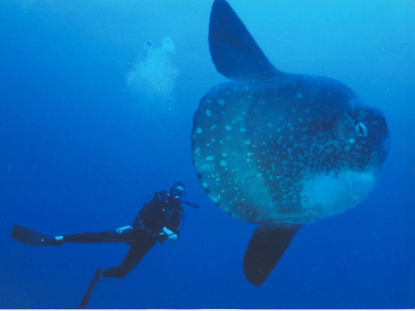 301 moved permanently for Mola mola fish