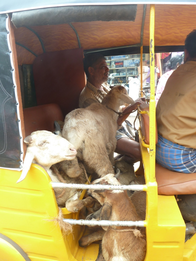 have goats will travel