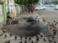 feeding the pigeons