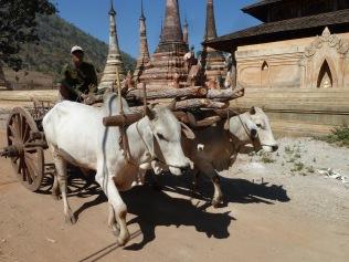 Ox cart at pagoda