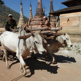 Ox cart at pagoda