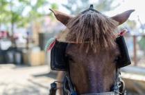 Typical Gili pony
